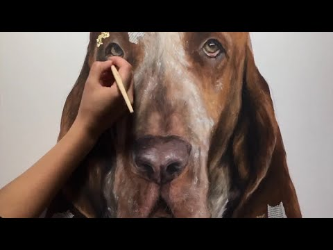 Bracco Italiano | dog speed painting | pet portrait