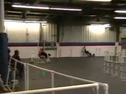 2012-02-26 AKC C4 - Artaius movie.wmv