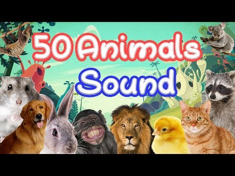 50 Animals Sound Learning video for kids / Children