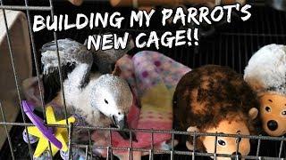 Building My Parrot
