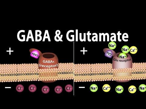 Neuroscience Basics: GABA and Glutamate, Animation