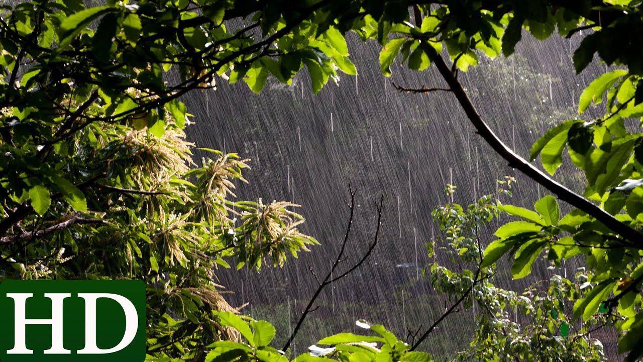 Sonido de Lluvia y Sonidos de la Naturaleza
