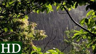 Lluvia HD | Sonido de Lluvia y Sonidos de la Naturaleza | Dormir