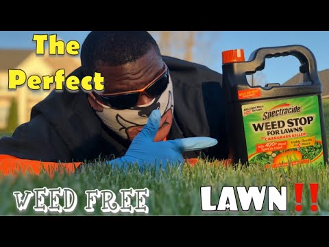How To Get The Perfect Weed FREE Lawn In 10 Minutes Plus How To Use Spectracide Weed Stop For Lawns