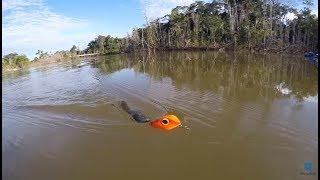 SAPO CURURU, isca artificial anti-enrosco para pesca de traíra mandando bem no tucunaré!