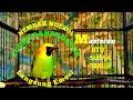 Cucak Ranting Gacor Buat Masteran Biar Rajin Bunyi Emosi Gacor Dor  Mp3 - Mp4 Download