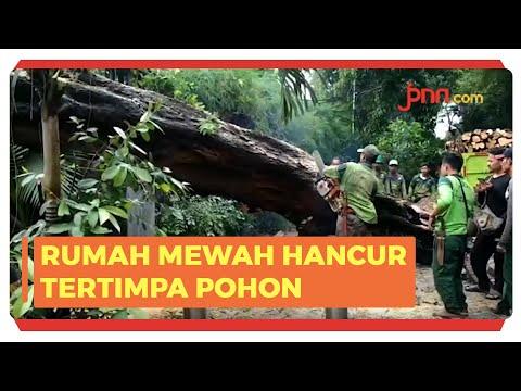 Pohon Tumbang Timpa Tiang Listrik di Kompleks Rumah Mewah Tegal Menteng Jakarta