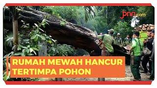 Pohon Tumbang Timpa Tiang Listrik di Kompleks Rumah Mewah Tegal Menteng Jakarta - JPNN.com