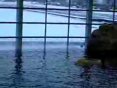 Shred Aquarium @ Chicago, Illinois
