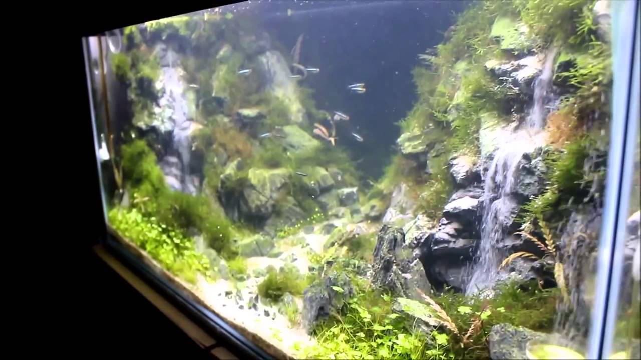 Waterfall aquarium youtube for Waterfall fish tank