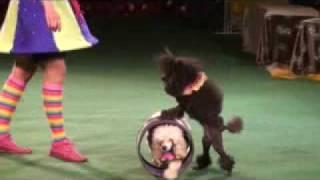 Дрессированные животные (Цирк Олега Плахтеева)
