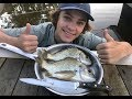 MONSTER Bream - Catch n Cook