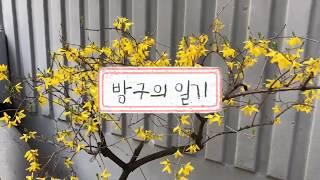[방구의 주말 일상] 봄맞이 서울 근교 드라이브 데이트…