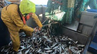 Le Brexit, un océan d'incertitudes pour les pêcheurs