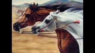 Красивые аравийские лошади