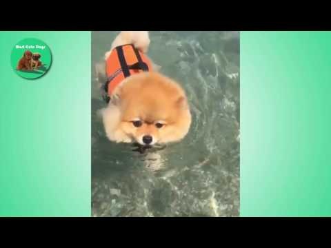 hqdefault top 10 funny dog and baby memes from youtube free mp3 music download,Top 10 Song Memes