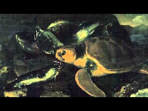 Saint-Saens: Carnival of the Animals~Tortues (Tortoises)