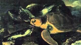 Saint-Saens: Carnival of the Animals~Tortues (Tortoises)