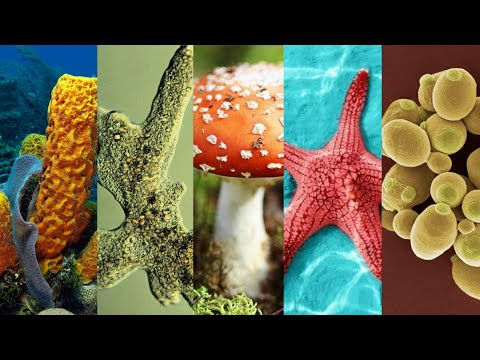 Advantages of asexual reproduction in starfish family services