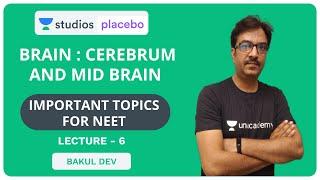 L6: Brain - Cerebellum and Medula | Most Important Topics for NEET | Pre-Medical - NEET/AIIMS
