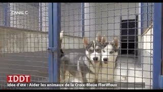 IDDT : Être bénévole à la Croix-Bleue de Floriffoux
