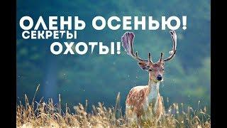 Как охотиться на оленя осенью в лесу