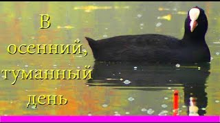 поклевка карася. В Тихий, Осенний, Туманный День ! Рыбалка. Ловля карася. fishing. Ловля на поплавок(Поклевка Карася на поплавочную удочку в осенний, туманный день. У каждого времени года есть свои прелести,..., 2013-10-16T10:14:28.000Z)