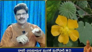 Atibala Plant, Traditional Ayurveda Remedies in Telugu by Dr. Murali Manohar Chirumamilla, M.D.