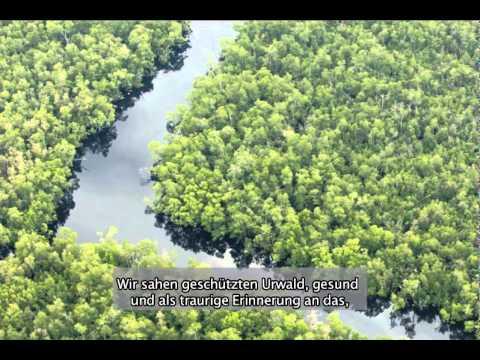 Save Sumatra