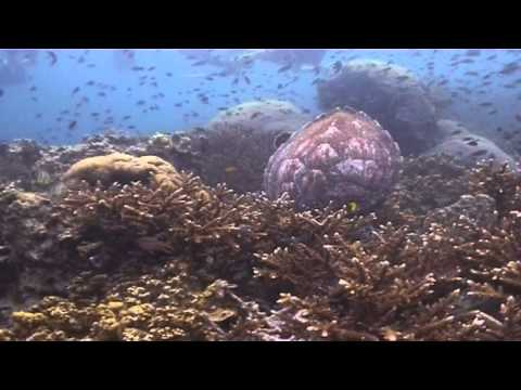 Open Water Diving @ Ban's Diving Resort, Koh Tao, Thailand