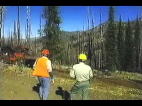 Dead Standing Timber Harvesting and Reclamation