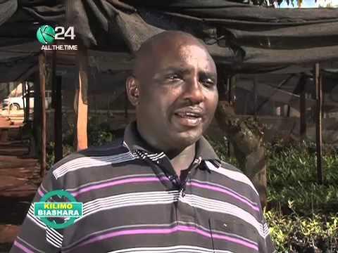 Kilimo Biashara: Makadamia Farming