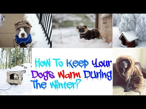 Tips On Keeping your Pitbulls/Dogs Warm During The Winter!!!