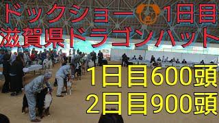 今日は関西の滋賀県竜王町ドラゴンハットで2日間開催されるドックショー...