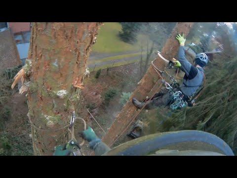 Arborist Dudes | Tree Removal Dead Tree | Spruce | Seilklettertechnik
