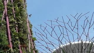 新加坡 濱海南花園 超級樹 Supertree Grove 0514 1050  134