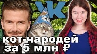 Кот-чародей ценой 5 млн ₽