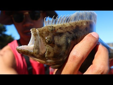 Easy, Effective And Fun Way To Catch Fish Like Halibut And Striped Bass