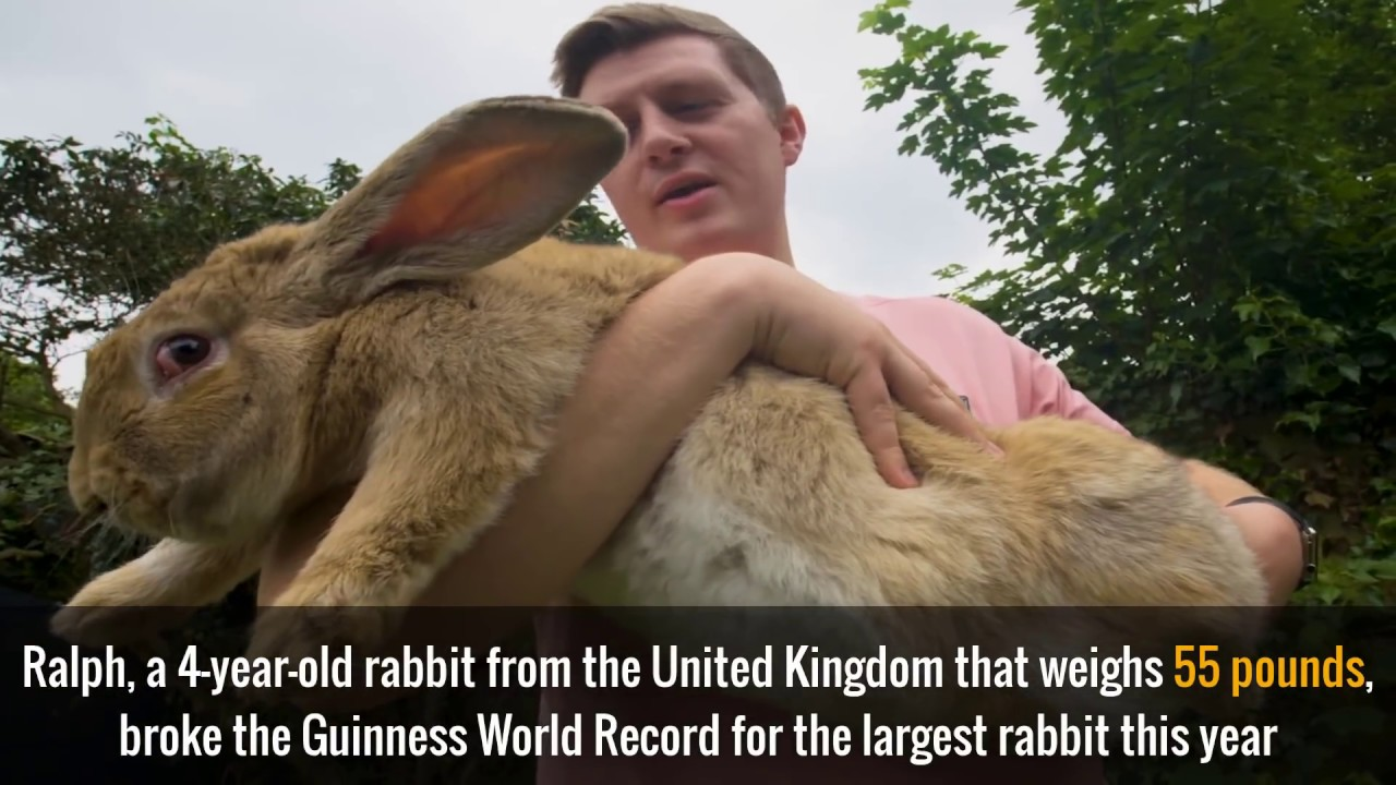Of The Worlds Biggest Pets YouTube - 10 of the worlds biggest pets