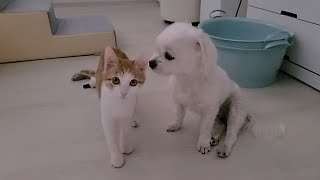 강아지와 고양이가 함께 지내려면
