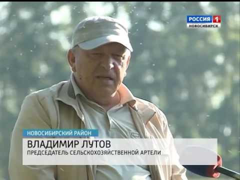 Вопрос: Где собирать клюкву в Новосибирской области?