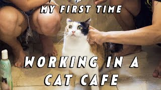 MY FIRST TIME - WORKING IN A CAT CAFE EP 32