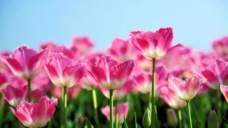 🌷  Primavera - Ludovico Einaudi 🌷