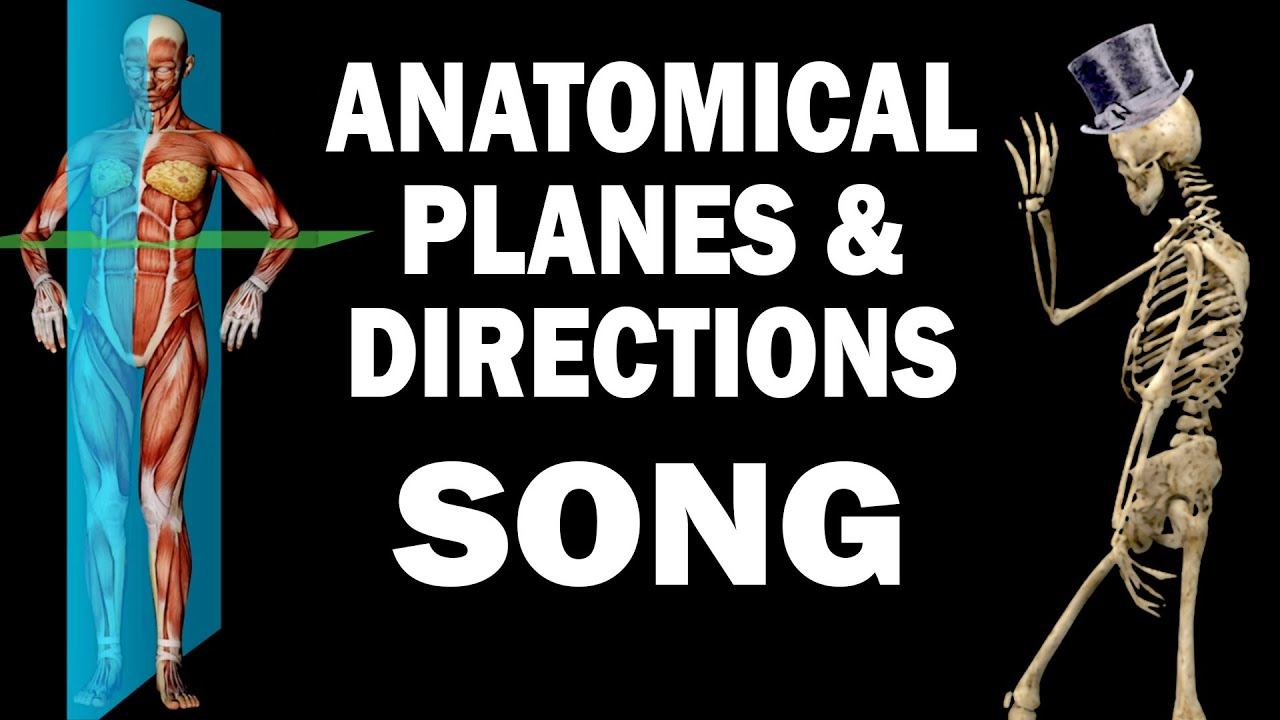 ANATOMICAL PLANES AND DIRECTIONS SONG