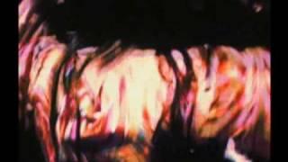 Part 1 Flight of the Phoenix: The Jefferson Starship Story