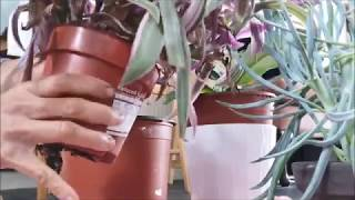 The Ugly/Messy side of Keeping Houseplants