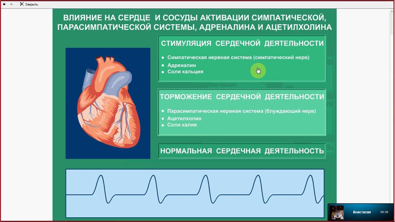 ЕГЭ .Биология.Разбор задания 13. Анатомия.Эндокринная система.