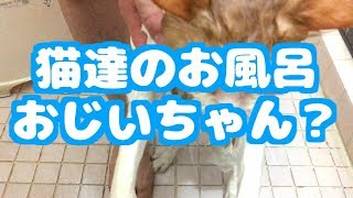 猫のお風呂 可愛い猫動画 Cat's Bath Cute Cat Videos