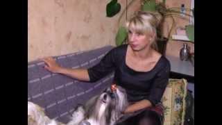 Телевещание ВДТ.mpg Питомник ши-тцу «Brings happiness»
