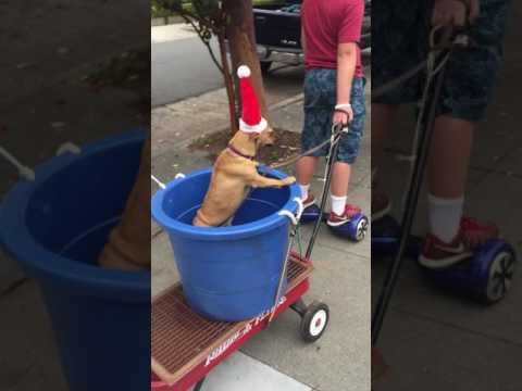 The Christmas Chihuahua Express, featuring JoJo